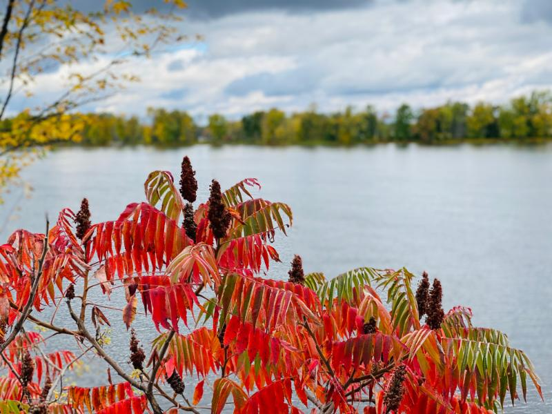 Migrating Colors. An image showing fall colors superimposed over a lake, with a cloudy sky.