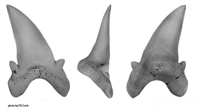 vertebrate anatomy morphology palaeontology